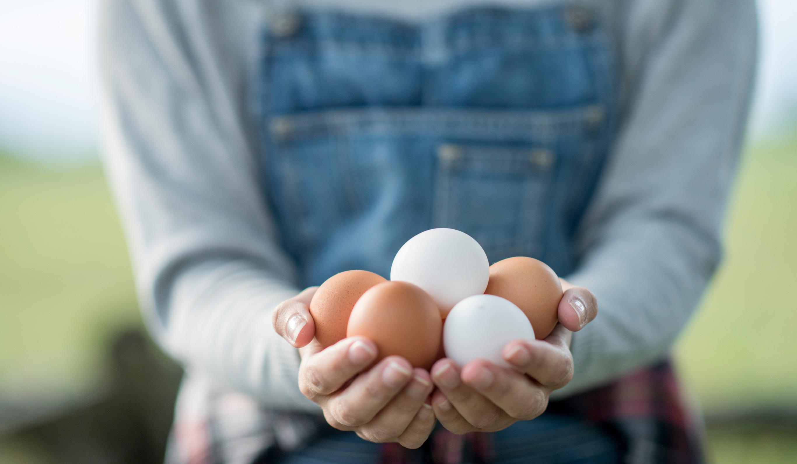 Image for H εταιρεία μας χρησιμοποιεί αποκλειστικά cage-free αυγά